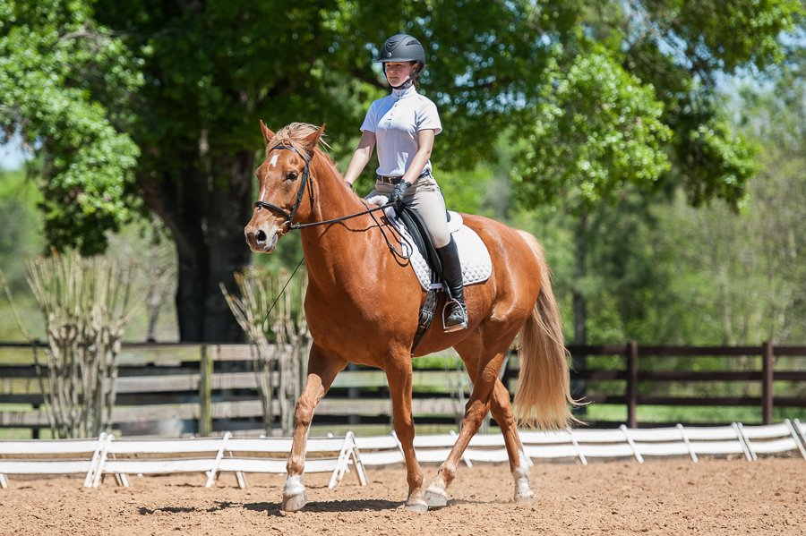 Hearthstone Schooling Show March 2015