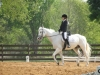 Hearthstone Schooling Show March 2011